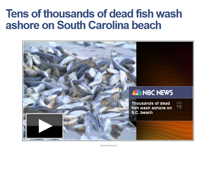 http://usnews.nbcnews.com/_news/2013/01/17/16566091-tens-of-thousands-of-dead-fish-wash-ashore-on-south-carolina-beach?lite